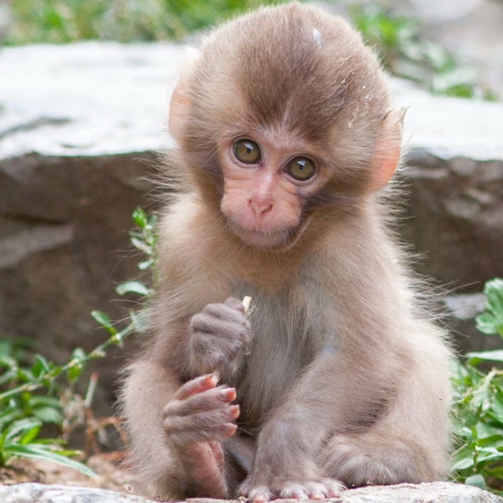 В окрестностях Лимассола ищут сбежавшую обезьянку