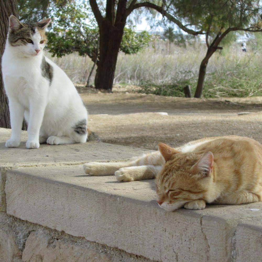 Власти Ларнаки позаботятся о бездомных котах