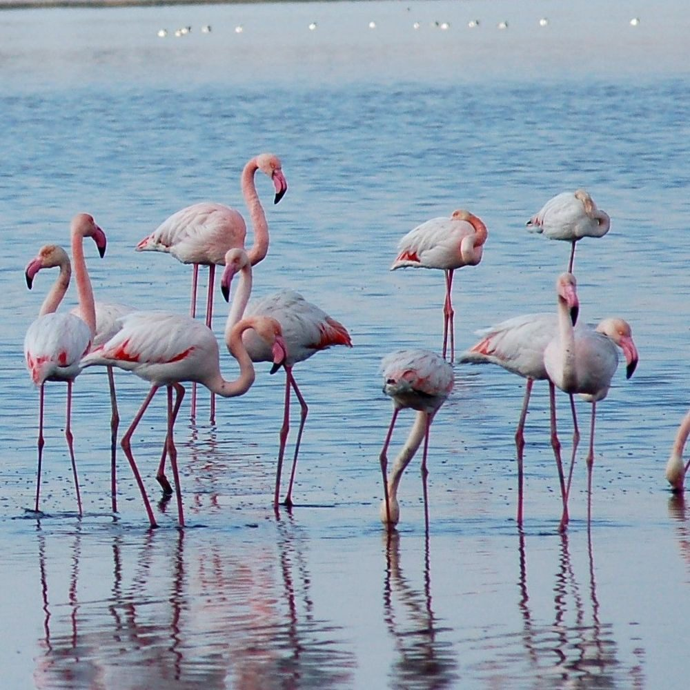 Власти Ларнаки разрабатывают план спасения Соленого озера – излюбленного места зимовки розовых фламинго