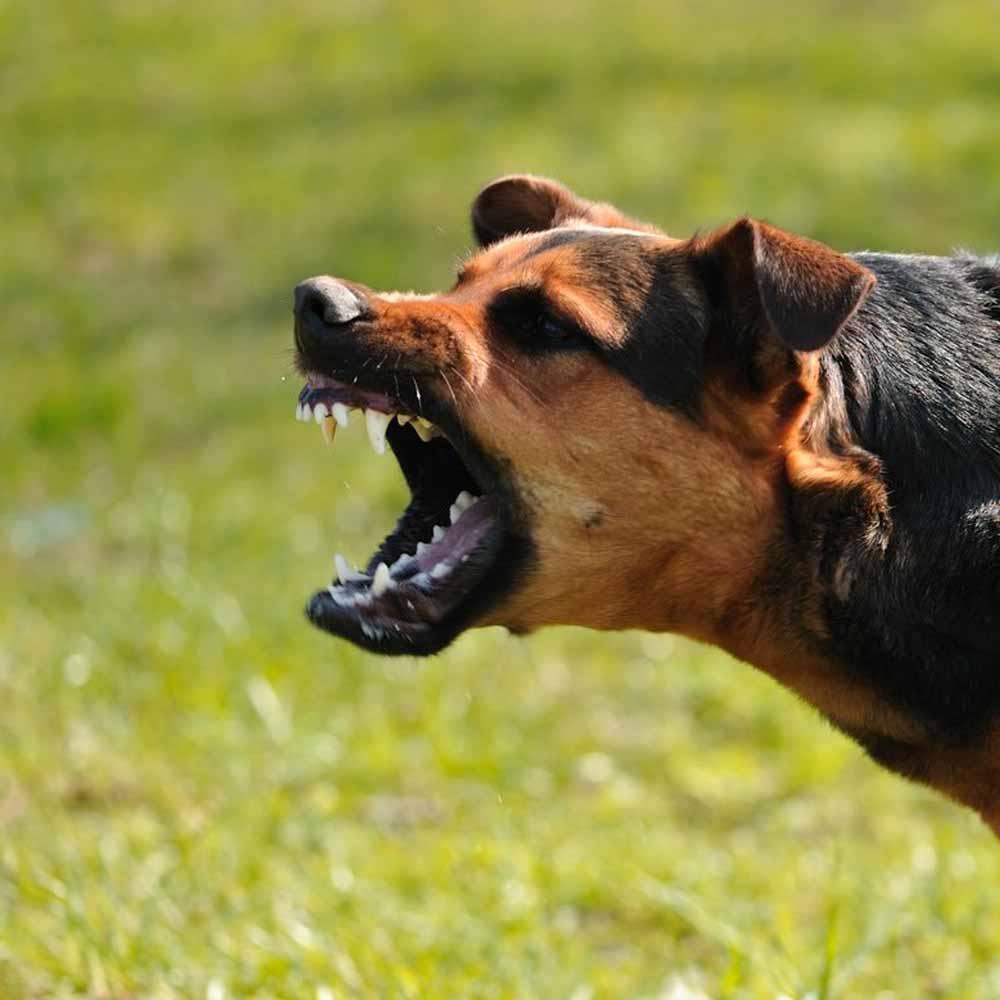 Хозяйку собак накажут за нападение животных на людей