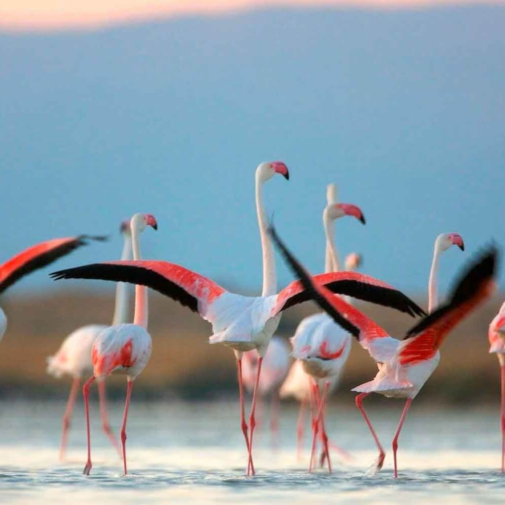 Кипрские фламинго «переехали»