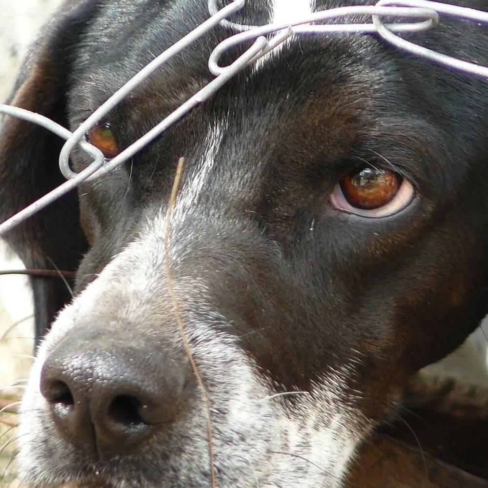 Житель Пафоса предстанет перед судом за жестокое обращение с животными