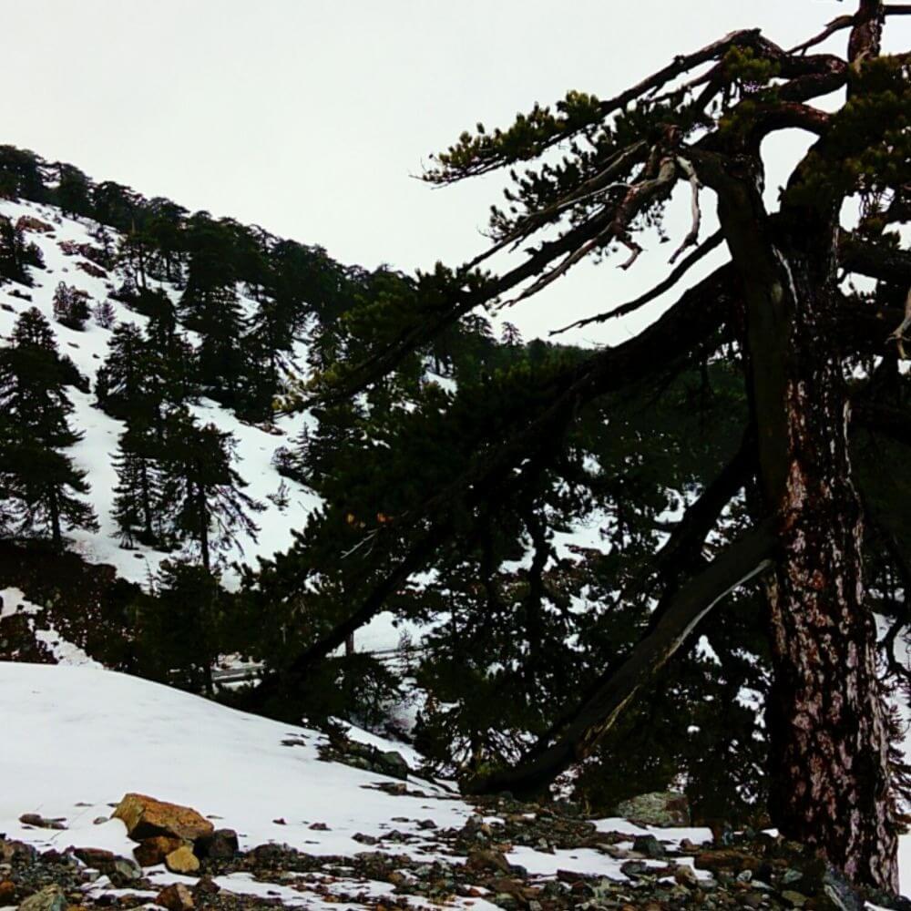 Происшествия в горах Троодоса: спасатели искатели заблудившихся скаутов и спасали упавших в ущелье девочек