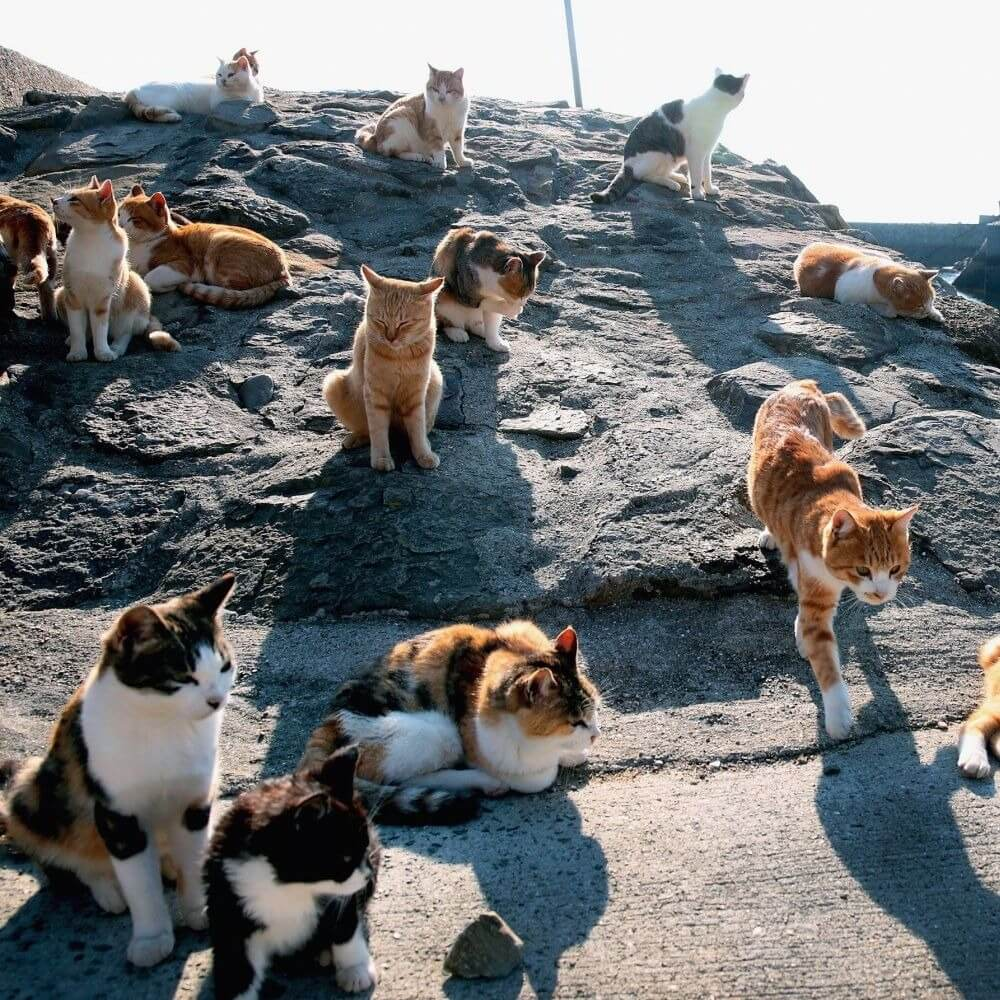 Топ-10 мест в мире, где стоит побывать любителям кошек